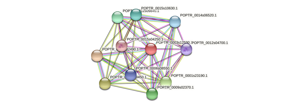 POPTR_0003s12590.1 protein (Populus trichocarpa) - STRING interaction network