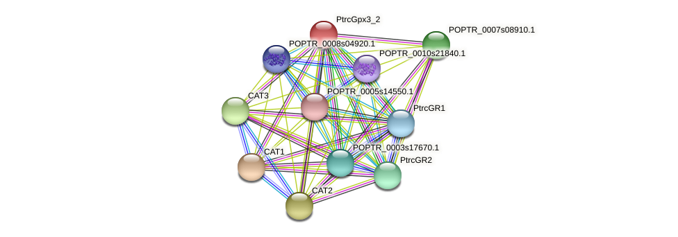 POPTR_0003s12620.1 protein (Populus trichocarpa) - STRING interaction network