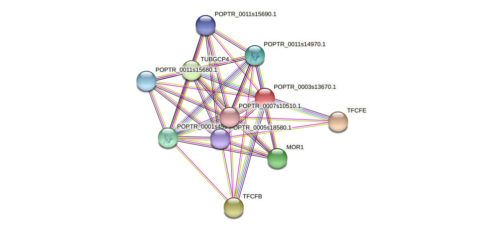 POPTR_0003s13670.1 protein (Populus trichocarpa) - STRING interaction network
