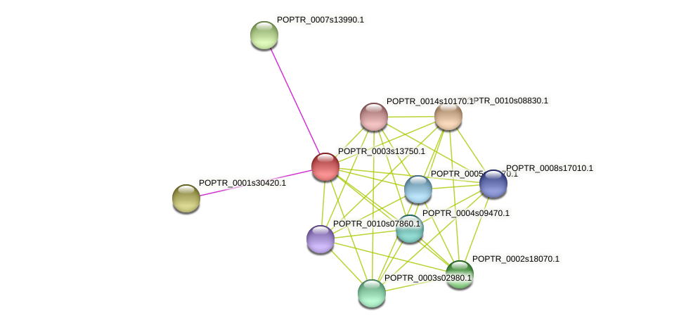POPTR_0003s13750.1 protein (Populus trichocarpa) - STRING interaction network