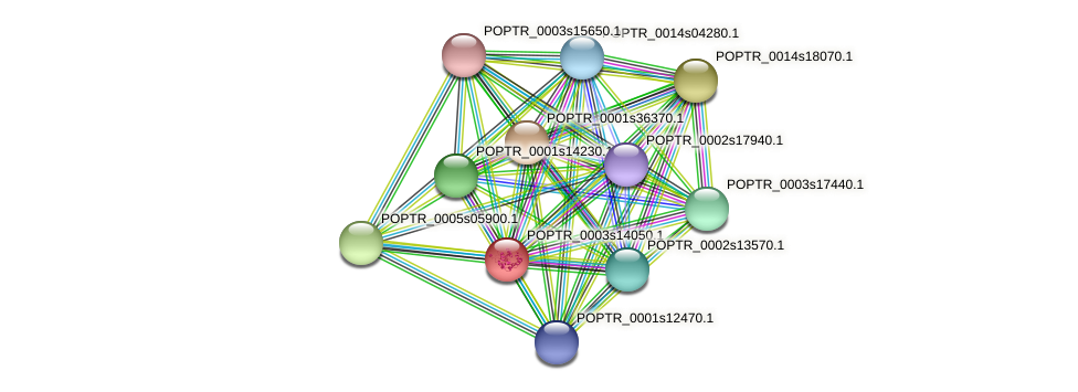 POPTR_0003s14050.1 protein (Populus trichocarpa) - STRING interaction network