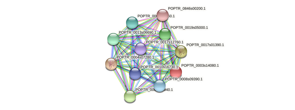POPTR_0003s14080.1 protein (Populus trichocarpa) - STRING interaction network