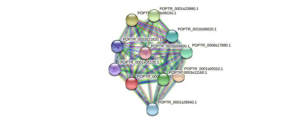 POPTR_0003s14190.1 protein (Populus trichocarpa) - STRING interaction network