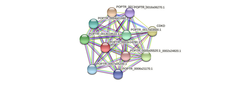 POPTR_0003s14290.1 protein (Populus trichocarpa) - STRING interaction network