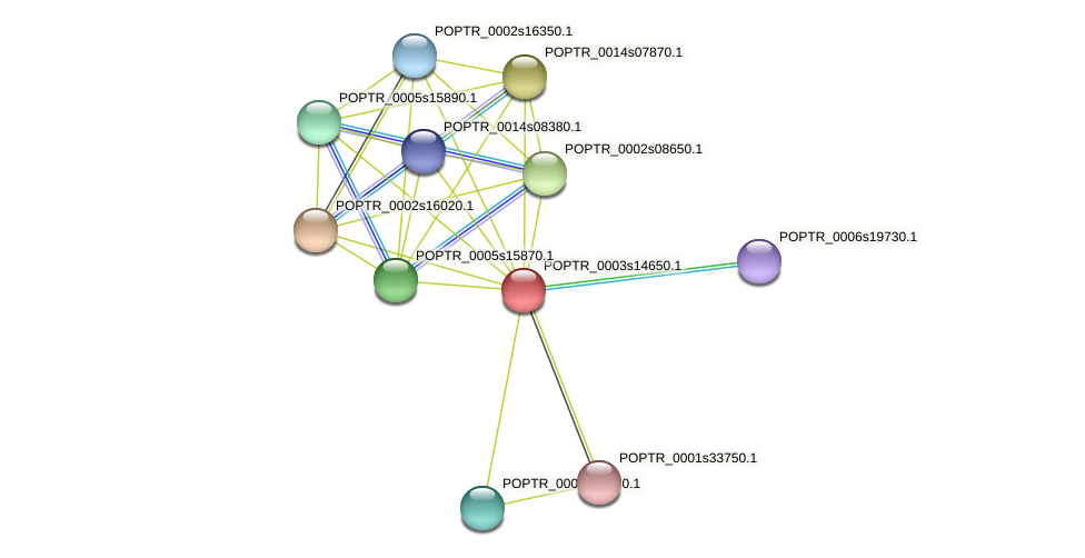 POPTR_0003s14650.1 protein (Populus trichocarpa) - STRING interaction network