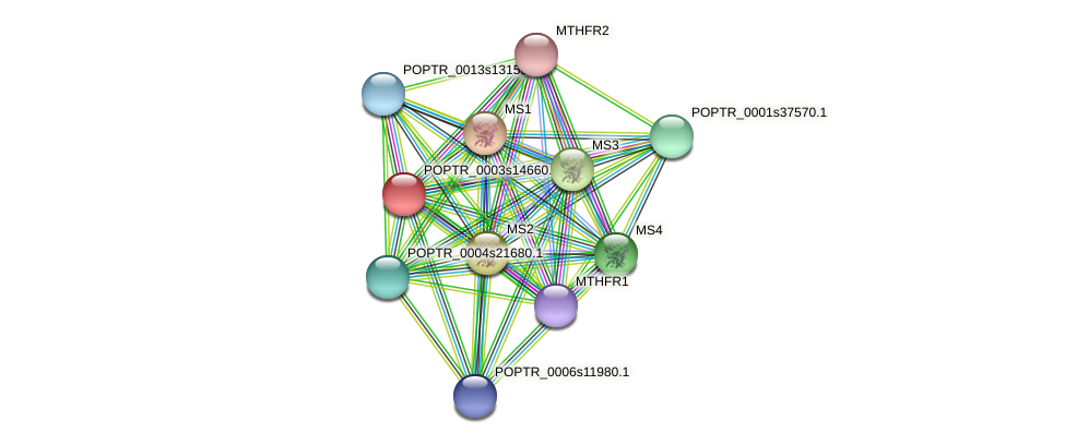 POPTR_0003s14660.1 protein (Populus trichocarpa) - STRING interaction network