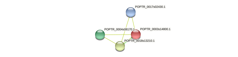 POPTR_0003s14800.1 protein (Populus trichocarpa) - STRING interaction network