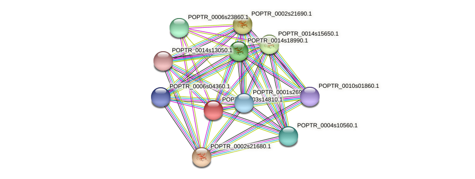 POPTR_0003s14810.1 protein (Populus trichocarpa) - STRING interaction network