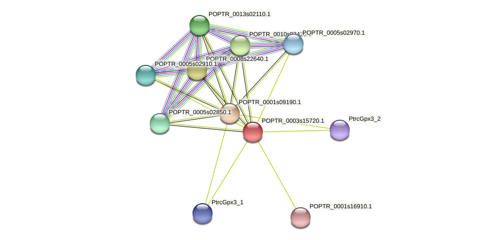 POPTR_0003s15720.1 protein (Populus trichocarpa) - STRING interaction network