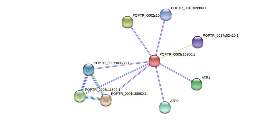 POPTR_0003s15900.1 protein (Populus trichocarpa) - STRING interaction network