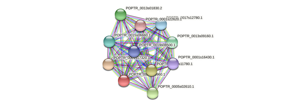 POPTR_0003s15960.1 protein (Populus trichocarpa) - STRING interaction network
