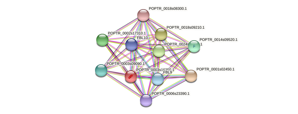 POPTR_0003s16350.1 protein (Populus trichocarpa) - STRING interaction network