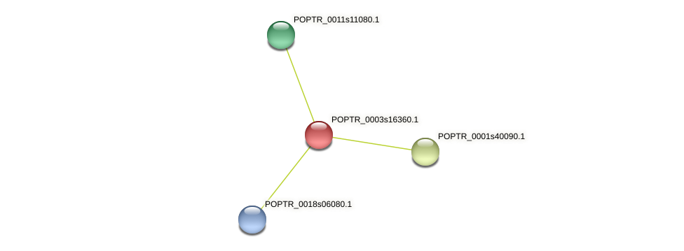POPTR_0003s16360.1 protein (Populus trichocarpa) - STRING interaction network