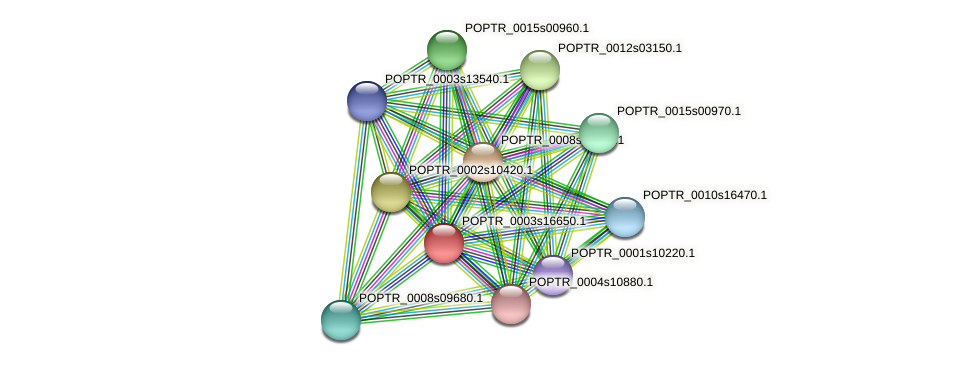 POPTR_0003s16650.1 protein (Populus trichocarpa) - STRING interaction network