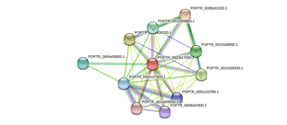 POPTR_0003s17060.1 protein (Populus trichocarpa) - STRING interaction network