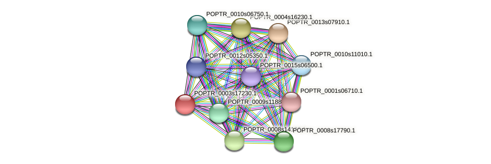 POPTR_0003s17230.1 protein (Populus trichocarpa) - STRING interaction network