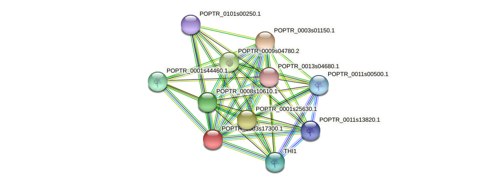 POPTR_0003s17300.1 protein (Populus trichocarpa) - STRING interaction network