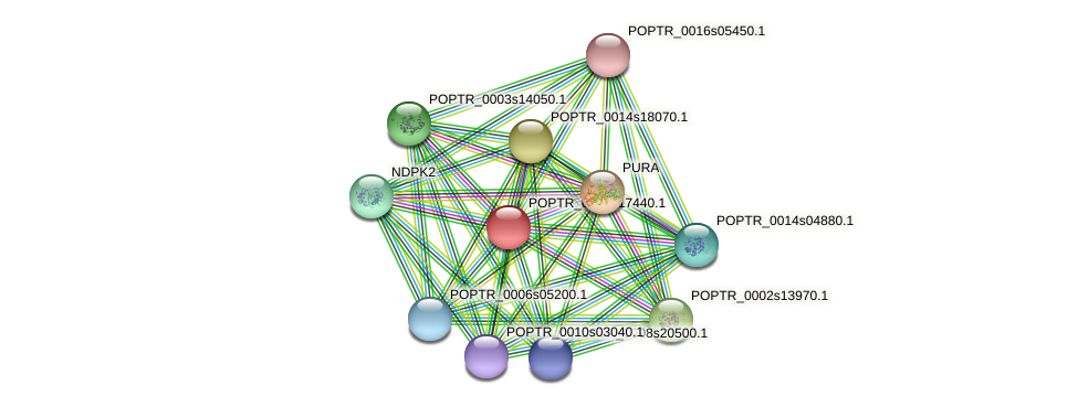 POPTR_0003s17440.1 protein (Populus trichocarpa) - STRING interaction network
