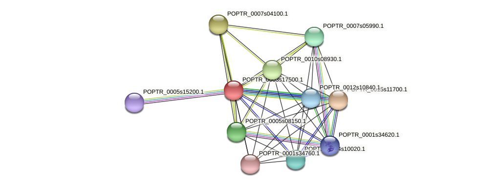 POPTR_0003s17500.1 protein (Populus trichocarpa) - STRING interaction network