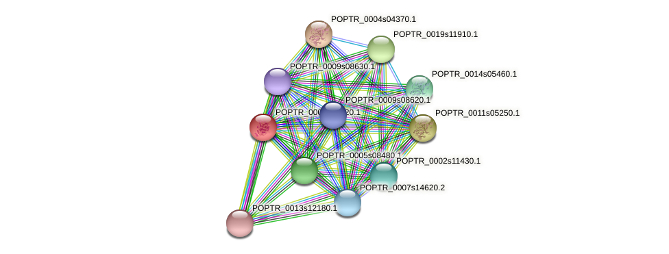 POPTR_0003s17520.1 protein (Populus trichocarpa) - STRING interaction network