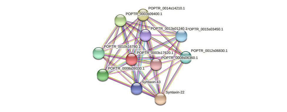 POPTR_0003s17620.1 protein (Populus trichocarpa) - STRING interaction network