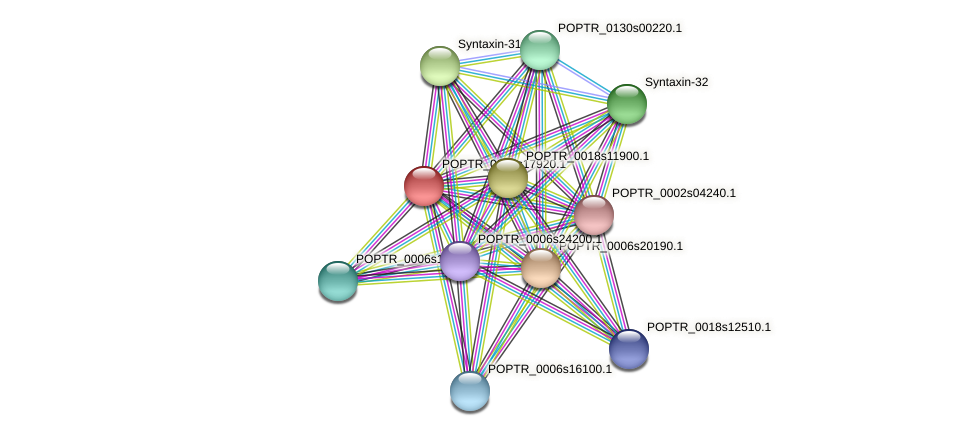 POPTR_0003s17920.1 protein (Populus trichocarpa) - STRING interaction network