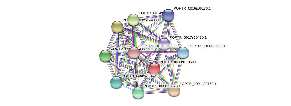 POPTR_0003s17950.1 protein (Populus trichocarpa) - STRING interaction network