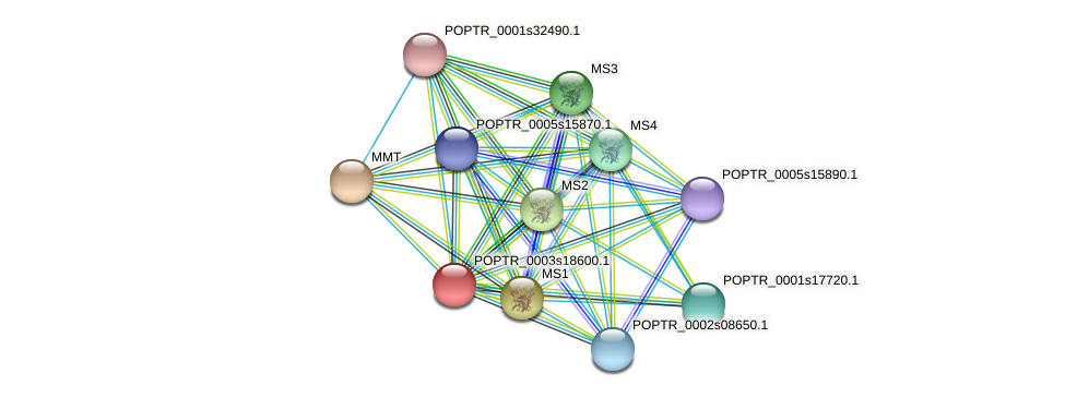 POPTR_0003s18600.1 protein (Populus trichocarpa) - STRING interaction network