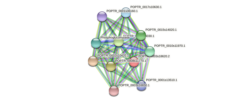 POPTR_0003s18620.1 protein (Populus trichocarpa) - STRING interaction network