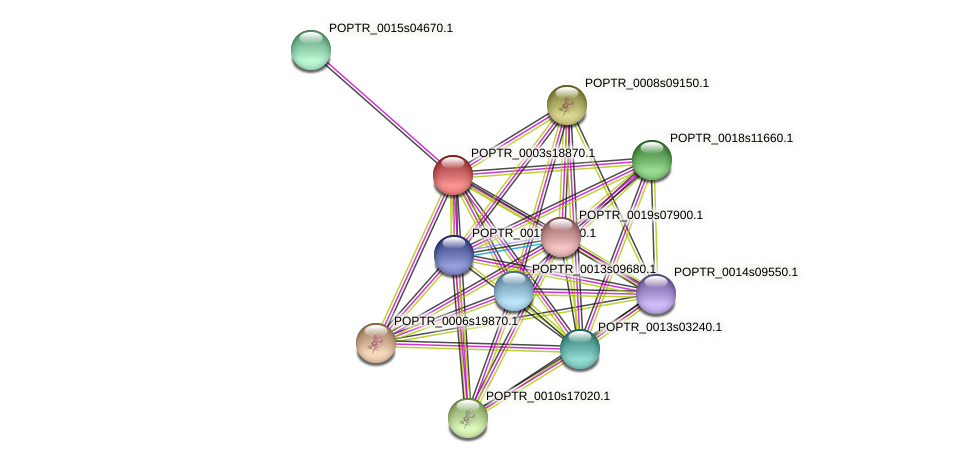 POPTR_0003s18870.1 protein (Populus trichocarpa) - STRING interaction network