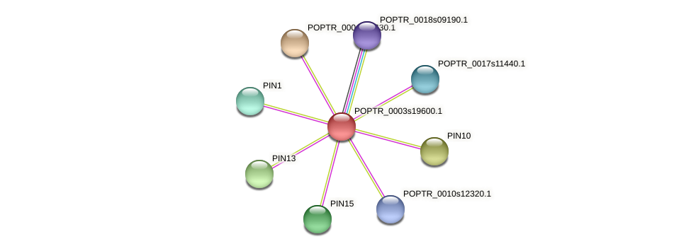 POPTR_0003s19600.1 protein (Populus trichocarpa) - STRING interaction network