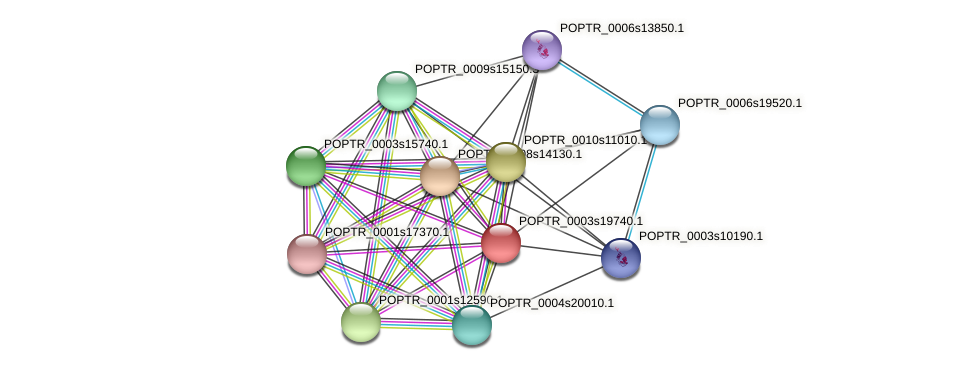 POPTR_0003s19740.1 protein (Populus trichocarpa) - STRING interaction network