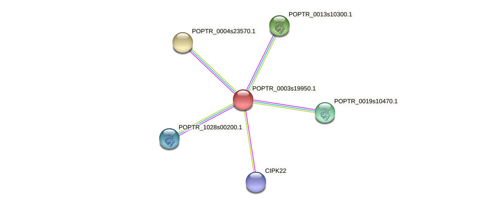 POPTR_0003s19950.1 protein (Populus trichocarpa) - STRING interaction network