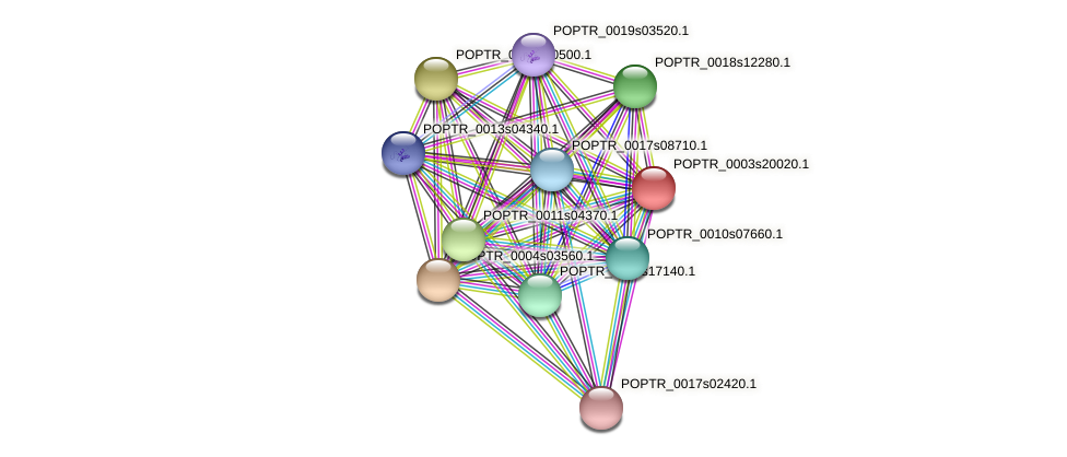 POPTR_0003s20020.1 protein (Populus trichocarpa) - STRING interaction network