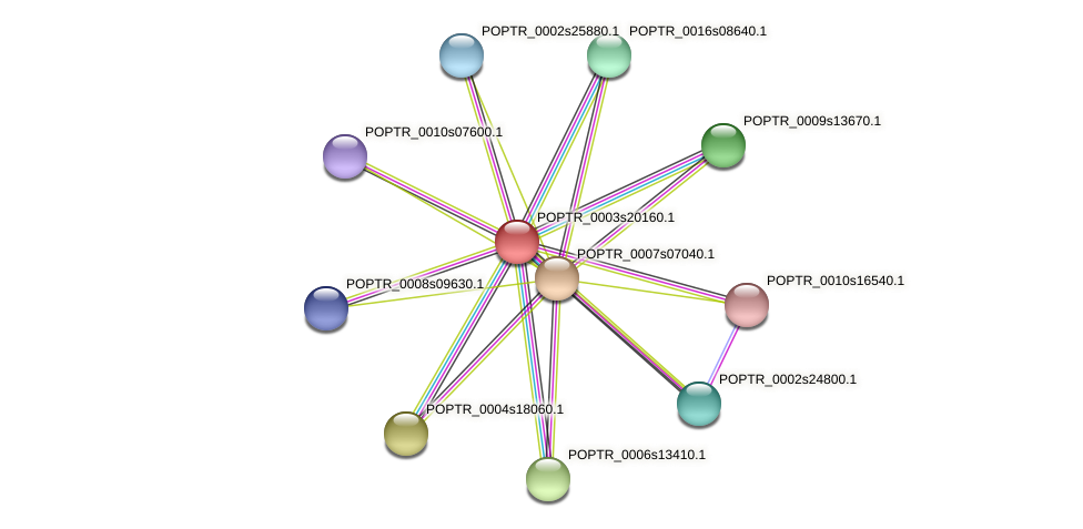 POPTR_0003s20160.1 protein (Populus trichocarpa) - STRING interaction network