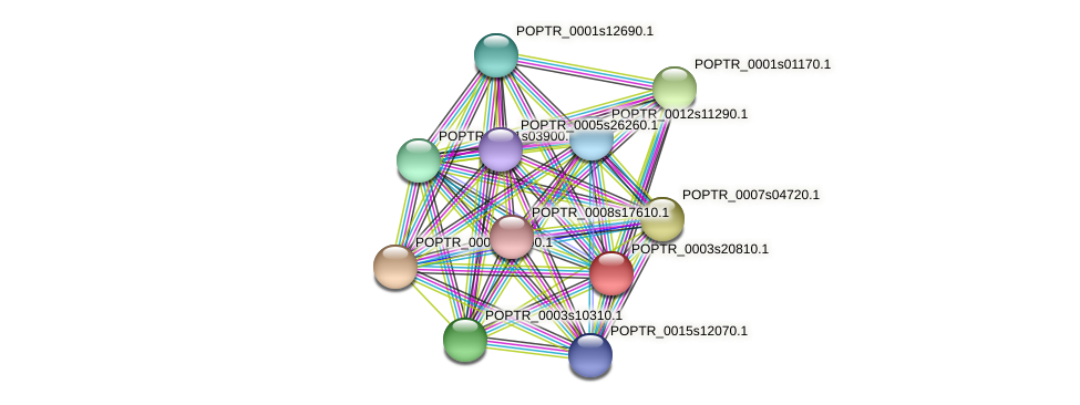 POPTR_0003s20810.1 protein (Populus trichocarpa) - STRING interaction network