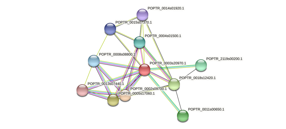POPTR_0003s20970.1 protein (Populus trichocarpa) - STRING interaction network