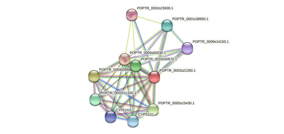POPTR_0003s21300.1 protein (Populus trichocarpa) - STRING interaction network