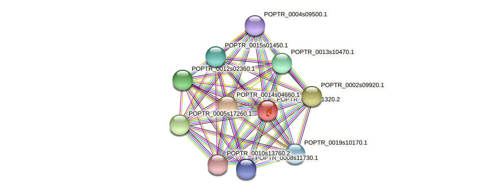 POPTR_0003s21320.1 protein (Populus trichocarpa) - STRING interaction network