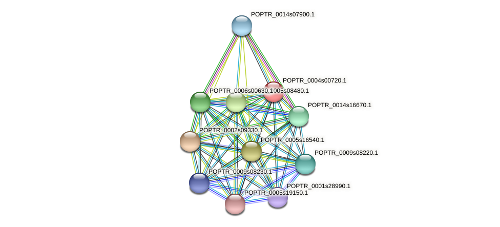 POPTR_0004s00720.1 protein (Populus trichocarpa) - STRING interaction network