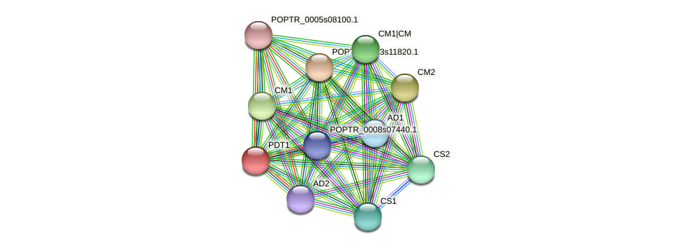 POPTR_0004s01340.1 protein (Populus trichocarpa) - STRING interaction network