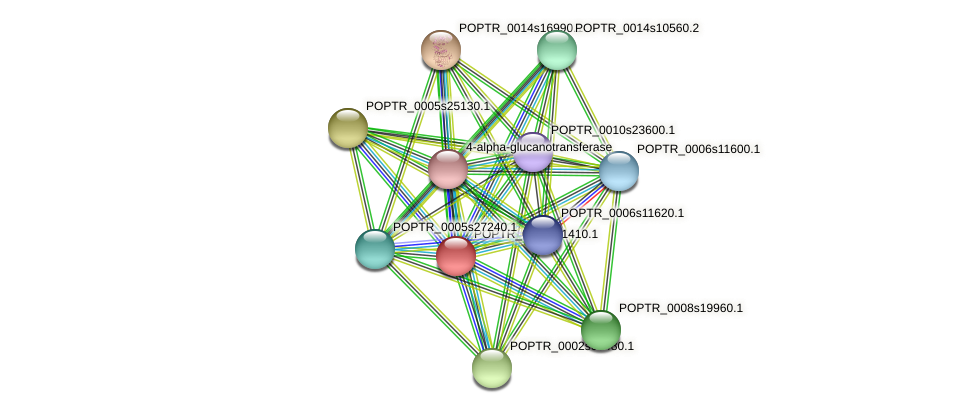 POPTR_0004s01410.1 protein (Populus trichocarpa) - STRING interaction network
