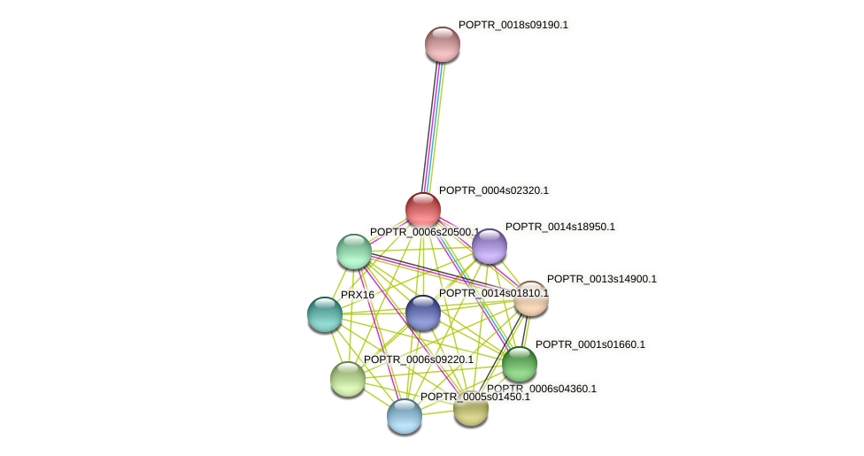 POPTR_0004s02320.1 protein (Populus trichocarpa) - STRING interaction network