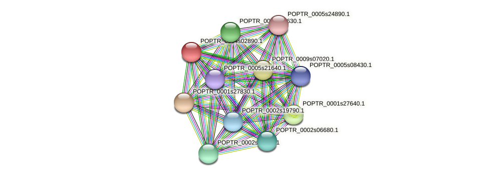 POPTR_0004s02890.1 protein (Populus trichocarpa) - STRING interaction network