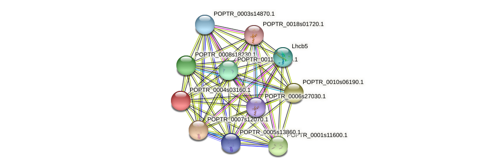 POPTR_0004s03160.1 protein (Populus trichocarpa) - STRING interaction network