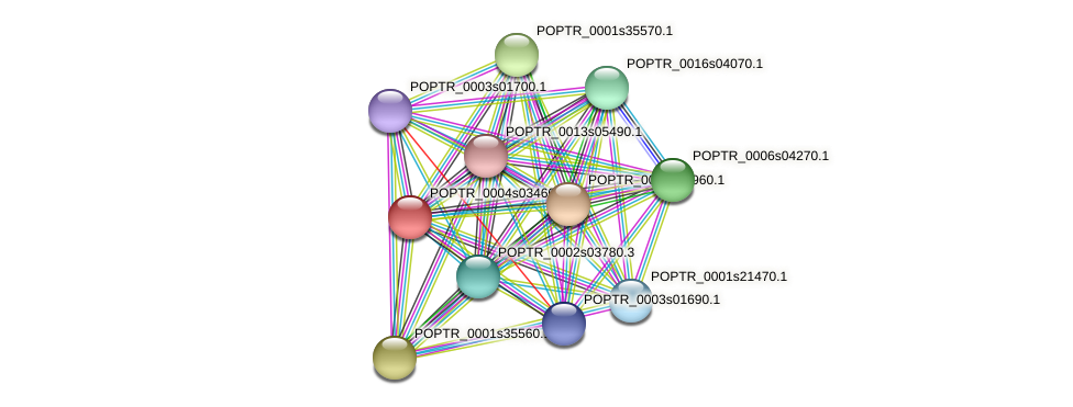 POPTR_0004s03460.1 protein (Populus trichocarpa) - STRING interaction network