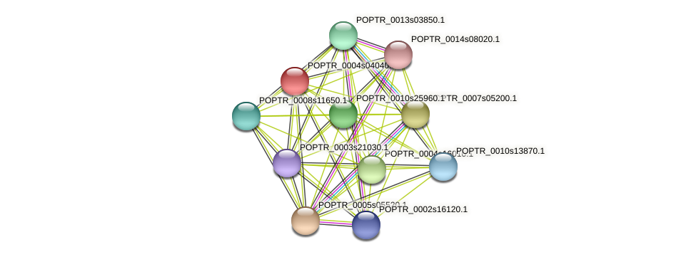 POPTR_0004s04040.1 protein (Populus trichocarpa) - STRING interaction network