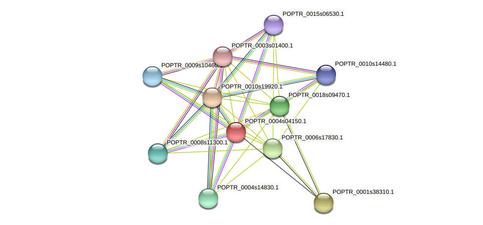 POPTR_0004s04150.1 protein (Populus trichocarpa) - STRING interaction network