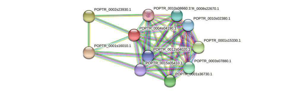 POPTR_0004s04190.1 protein (Populus trichocarpa) - STRING interaction network
