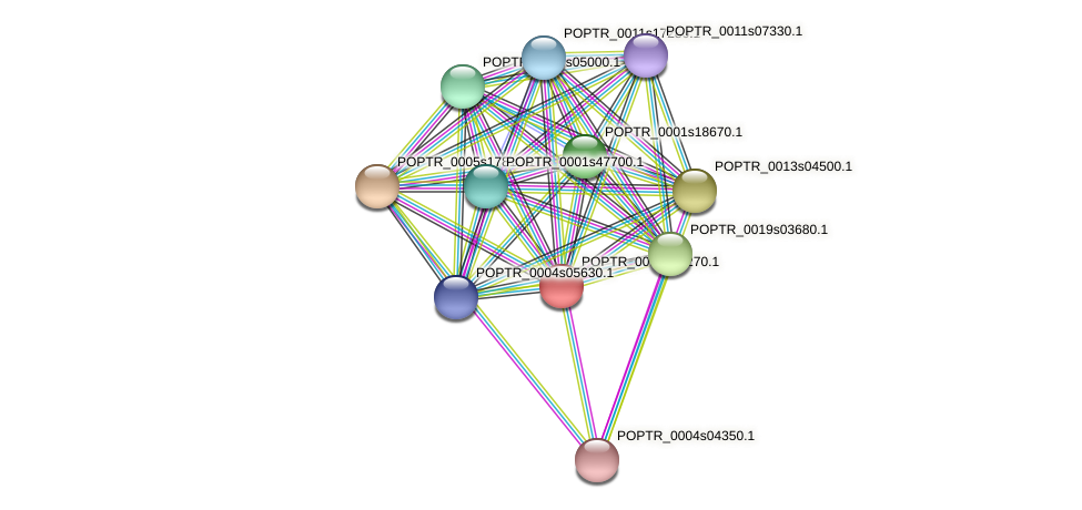 POPTR_0004s04270.1 protein (Populus trichocarpa) - STRING interaction network